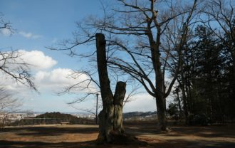 x-t3レビュー画質の評価青葉城址公園から見た仙台市内一望写真